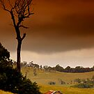 Images of The Dandenong Ranges by Darren Clarke