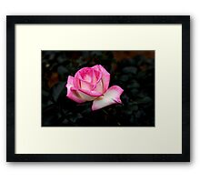 Pink And White Framed Print