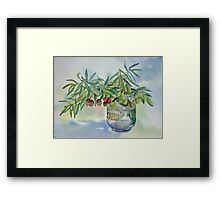 Olive branches in a jar Framed Print