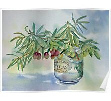 Olive branches in a jar Poster