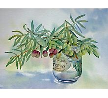 Olive branches in a jar Photographic Print
