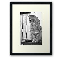 Tiger, the Manx Framed Print