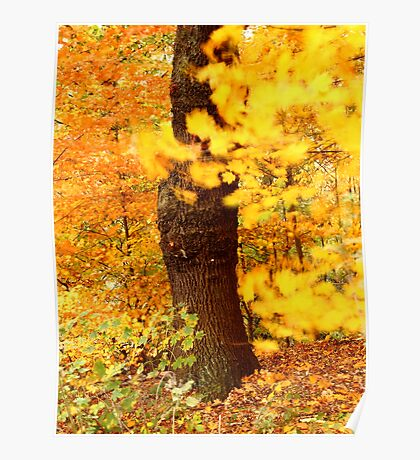 Autumn Afternoon Poster