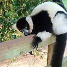 Lemur by JenniferLouise