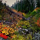 The Colors Of Fall ~ Oregon Cascades ~ by Charles &amp; Patricia   Harkins ~ Picture Oregon