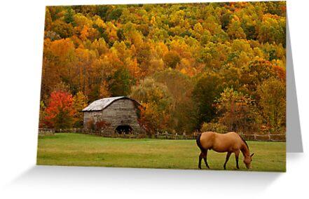 Autumn Graze by J.K. York