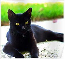 The Posing Cat Poster