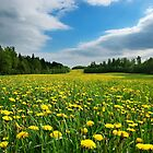 Dandelion Meadow by Martins Blumbergs