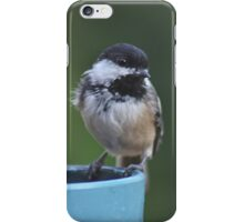 Chickadee perched on the edge of a flower pot iPhone Case/Skin