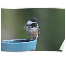 Chickadee perched on the edge of a flower pot Poster