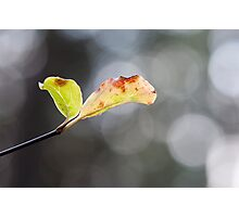 Green Leaves and Bokeh Photographic Print