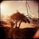 Pandanus Sunset by mewalsh