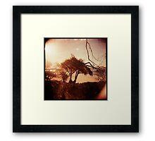 Pandanus Sunset Framed Print