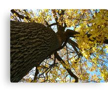Fall Series 25 Canvas Print