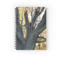 Autumn Tree 1 Spiral Notebook