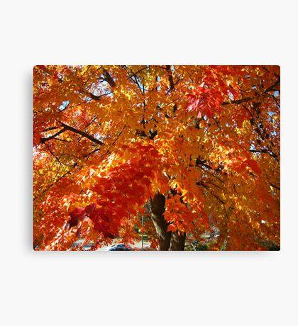 Fall Series 44 Canvas Print