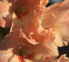 Gladioli of November by Pamela Jayne Smith