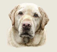 Golden Labrador by StephDix