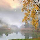 Fog in November