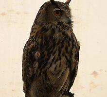 Owl by Ken1