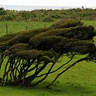 Wind-blown Trees by Laurel Talabere