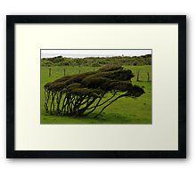 Wind-blown Trees Framed Print