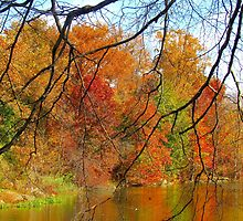 Autumn Krackle, New York City  by Alberto  DeJesus