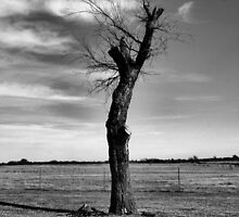 The Death of a Tree by Carrie Bonham