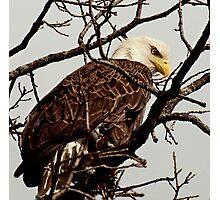 Up Close Bald Eagle Photographic Print