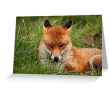 Sly Fox Greeting Card
