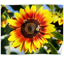 Bizzy Bees Sunflower Poster