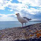 Seagull by JenniferLouise