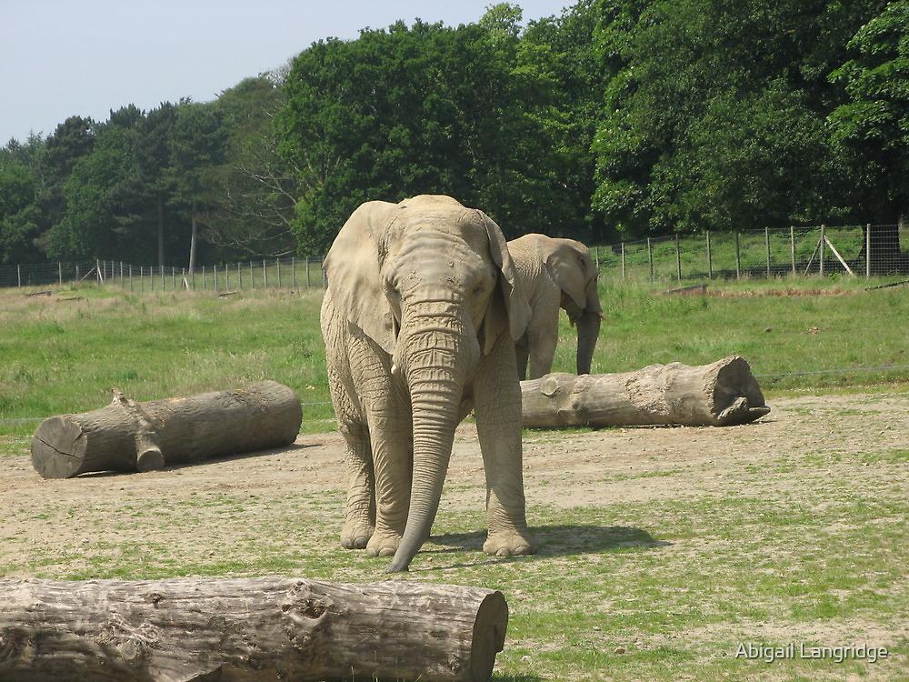 Elephant by Abigail Langridge