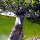 Evil emu by Abigail Langridge