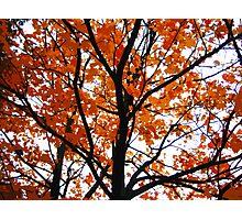 Orange leaves Photographic Print