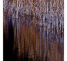Reed the Lines Photographic Print