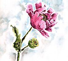 poppy flower by ildiko