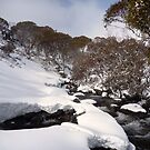 Guthega Back Country Snow Shoeing by Roger Barnes