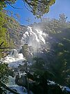 St Columba Falls, Pyengana, Tasmania, Australia by Margaret  Hyde
