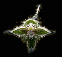 Ice dragon redux by wildwoosi