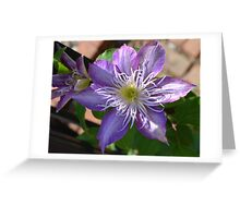 Purple Clematis Flower on Trellis  Greeting Card