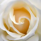Creamy Dreamy Rose by Glenda Williams