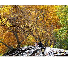 Autumn trees, Central Park - NYC Photographic Print
