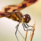 Male Halloween Pennant by William Brennan