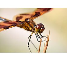 Male Halloween Pennant Photographic Print