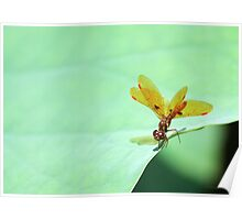 Dragonfly on the Edge Poster