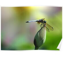 Dragonfly and Lotus Poster
