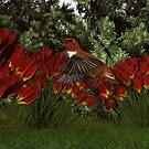 Rufous Hummingbird (Male) by Walter Colvin