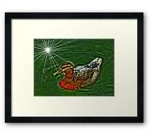 Duck Swim Framed Print