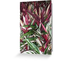 explosion of wonderous colours Greeting Card